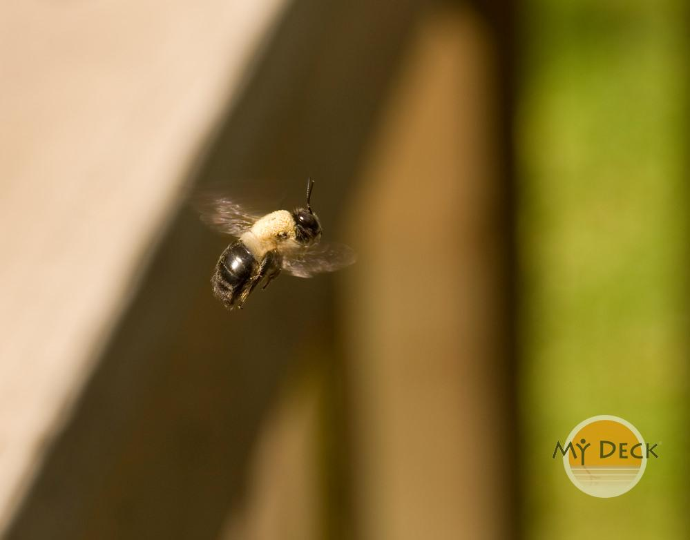 Tips for Keeping Your Deck and Pool Area Mosquito & Bee Free 1